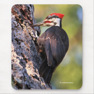Beautiful Pileated Woodpecker on the Tree Mouse Pad