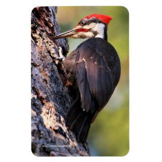 Beautiful Pileated Woodpecker on the Tree Rectangular Photo Magnet