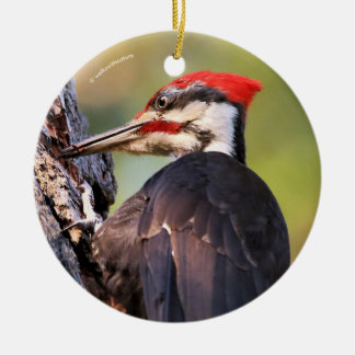 Beautiful Pileated Woodpecker on the Tree Round Ceramic Ornament