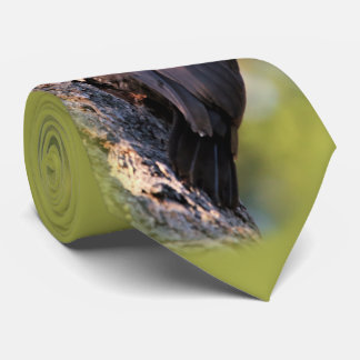 Beautiful Pileated Woodpecker on the Tree Tie