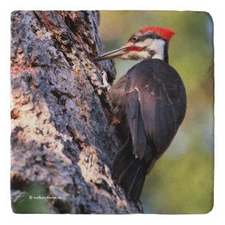 Beautiful Pileated Woodpecker on the Tree Trivet