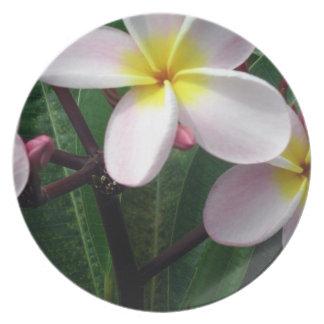 Beautiful Pink and Yellow Plumeria Plate