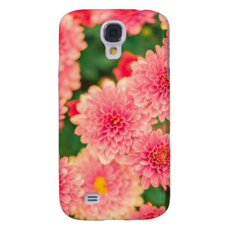 Beautiful Pink Dahlias Flowers