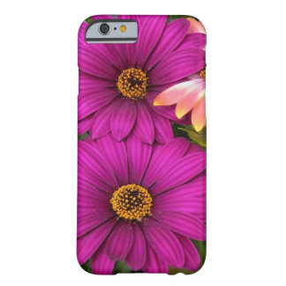 Beautiful Pink Daisies Barely There iPhone 6 Case