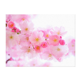 Beautiful Pink Japanese Cherry Tree Blossom Canvas Print