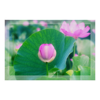 Beautiful Pink Lotus Bud Flower Green Leaf Blossom Poster