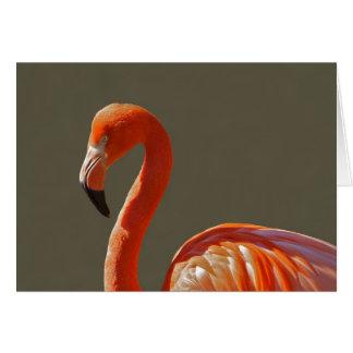 Beautiful pink-red flamingo bird card
