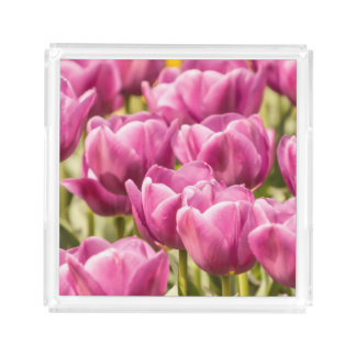 Beautiful Pink Tulips - Acrylic Tray