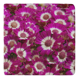 Beautiful Purple Cineraria Flowers Trivet