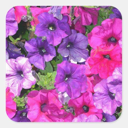 Beautiful purple petunia flowers square sticker