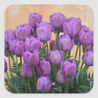 Beautiful purple spring tulips square sticker