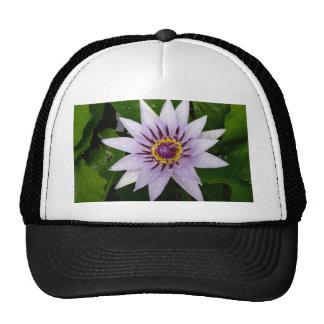Beautiful Purple Water Lily Trucker Hat