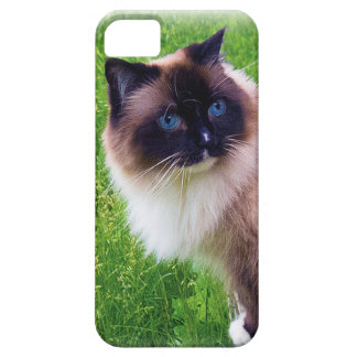 Beautiful Ragdoll Cat iPhone 5 Case