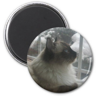Beautiful Ragdoll Hymalayan Cat Gazing into Winter Magnet