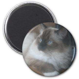Beautiful Ragdoll Hymalayan Cat Gazing Outside Magnet