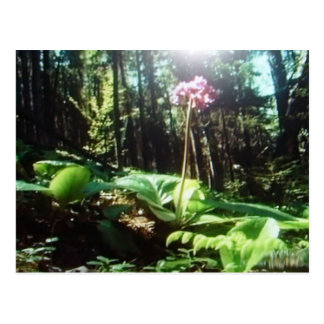 Beautiful rain forest postcard