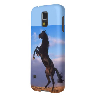 Beautiful rearing black horse with blue sky photo galaxy s5 cases