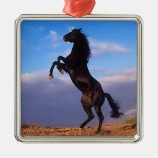 Beautiful rearing black horse with blue sky photo metal ornament