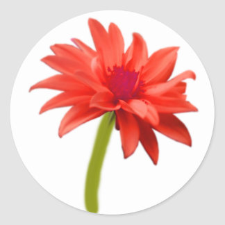 Beautiful Red Flower Classic Round Sticker