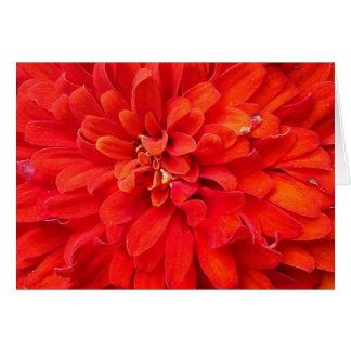 Beautiful red flower petals card
