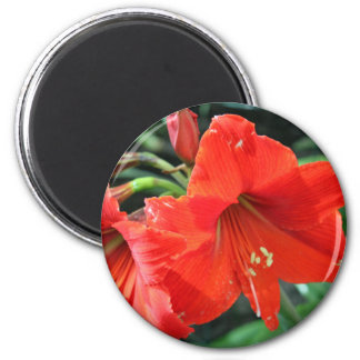 Beautiful Red Flower Photograph 2 Inch Round Magnet