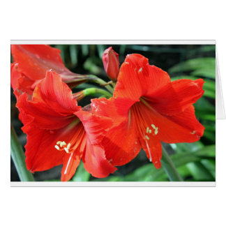 Beautiful Red Flower Photograph Card