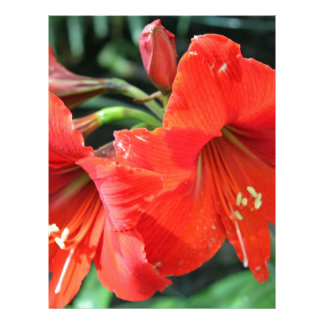 Beautiful Red Flower Photograph Letterhead