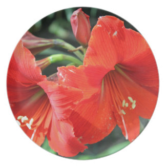 Beautiful Red Flower Photograph Plates