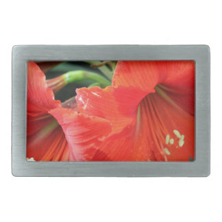 Beautiful Red Flower Photograph Rectangular Belt Buckle