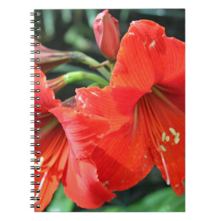 Beautiful Red Flower Photograph Spiral Note Book