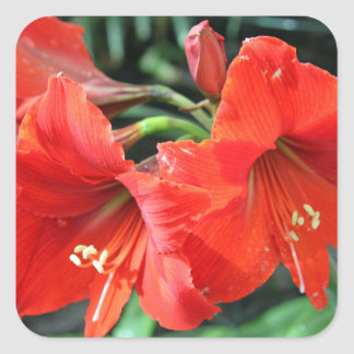 Beautiful Red Flower Photograph Square Sticker