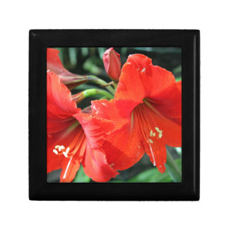 Beautiful Red Flower Photograph Trinket Boxes