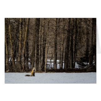 Beautiful Red Fox No. 2 Card