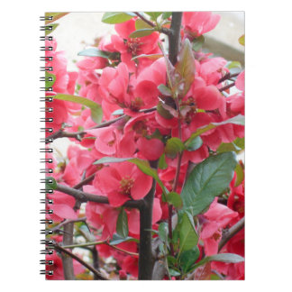 Beautiful Red Japanese Quince Notebooks