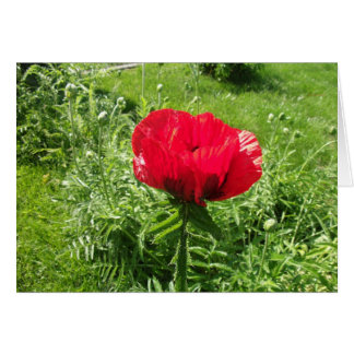 Beautiful Red Poppy Card
