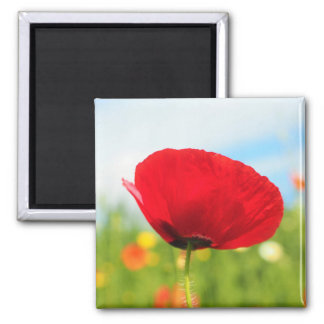 Beautiful Red Poppy Flower Square Magnet