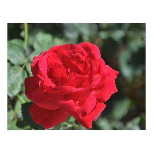 Beautiful red rose custom flyer