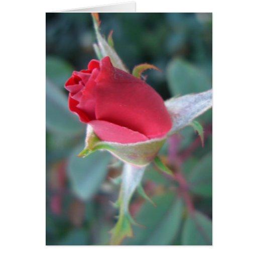 Beautiful Red Rosebud CricketDiane Roses Greeting Cards