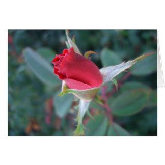 Beautiful Red Rosebud CricketDiane Roses Greeting Card