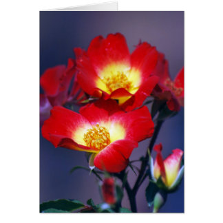 Beautiful red roses and meaning card