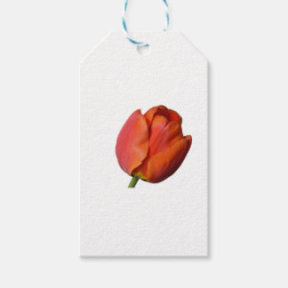 Beautiful red tulip of a flower from Europe Pack Of Gift Tags