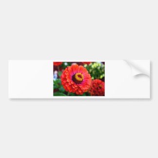 Beautiful Red Zinnia Flower Design Bumper Sticker