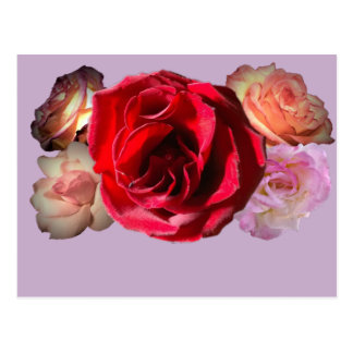 Beautiful Rose Floral Motif shown on a Postcard