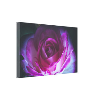 Beautiful rose flower canvas print