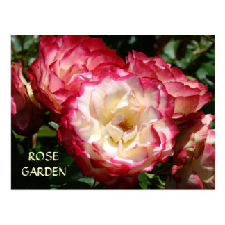 BEAUTIFUL ROSE GARDENS Post Cards Master Gardens