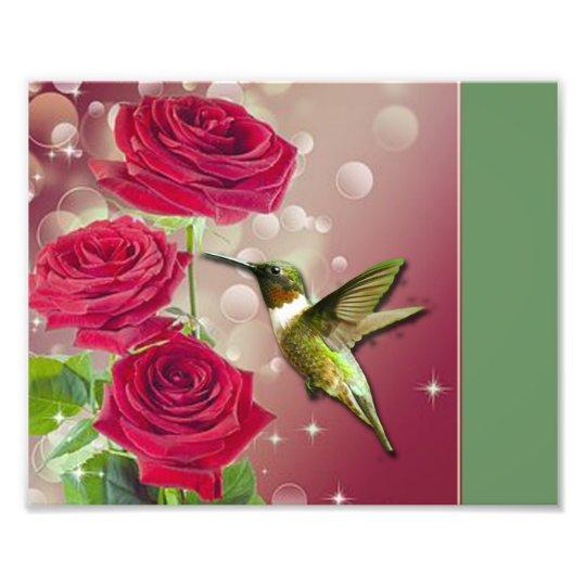 Beautiful Roses & Bird Photo Print
