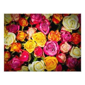 Beautiful Roses Photograph