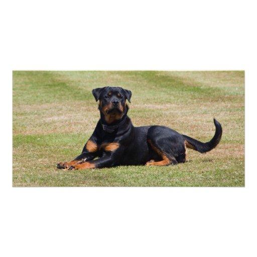 Beautiful Rottweiler dog photo card, gift idea