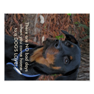 Beautiful Rottweiler Dog's Love Poster