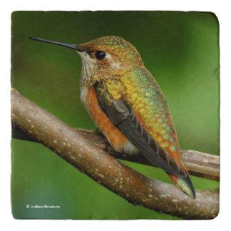 Beautiful Rufous Hummingbird on Twining Vines Trivet
